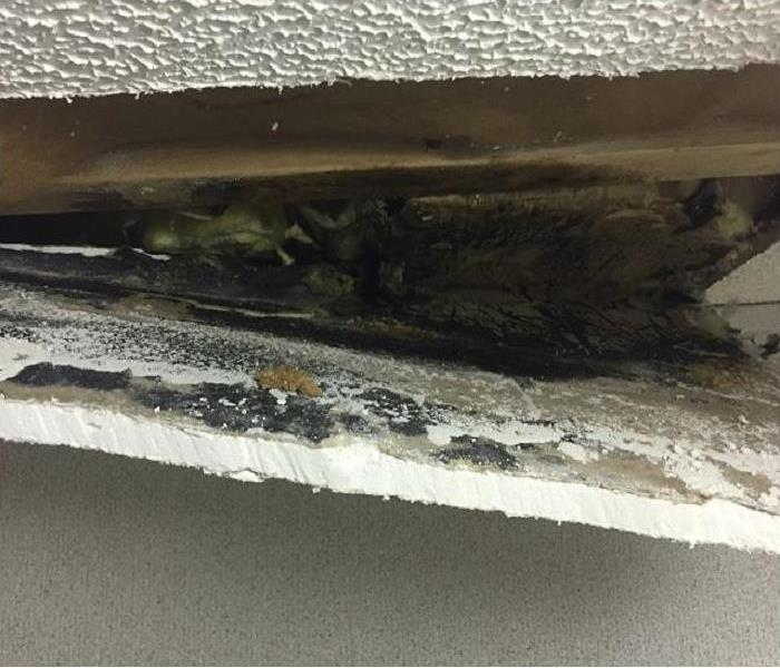 Mold Remediation Who Is Most At Risk??